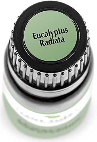 Eucalyptus-Radiata-Essential-Oil-30-ml-1-oz-100-Pure-Undiluted-Therapeutic-Grade