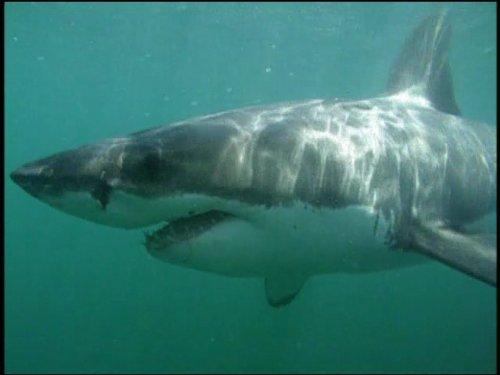 sharks-in-a-desert-sea