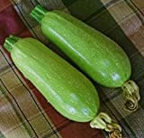 Just Seed Courgette - Clarion F1 - 8 Seeds