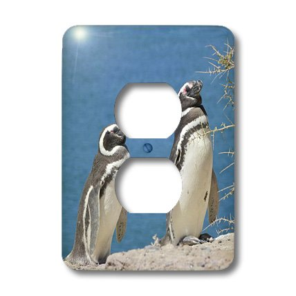 Lsp_85420_6 Danita Delimont - Penguins - Argentina, Peninsula Valdes, Penguin Colony - Sa01 Mme0449 - Michele Molinari - Light Switch Covers - 2 Plug Outlet Cover