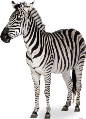 Animals - Advanced Graphics Life Size Cardboard Standup