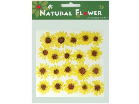 Fleurs naturelles séchées, séchée et de 2 Packs. confetti. multicule Jaune