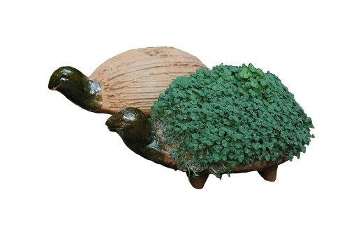 grow-your-own-turtle-cress-figure-including-cress-seeds-fair-trade-from-mexico