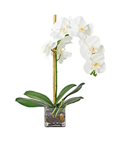 Creative Displays Inc. Phalaenopsis Water Cube, White/Green