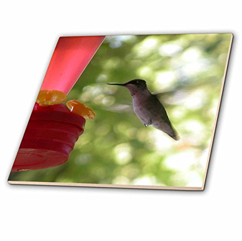 Beverly Turner Bird Photography - Hummingbird Flying to Feeder - 6 Inch Glass Tile (ct_29594_6)