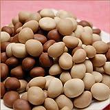 【訳ありチョコレート】 不揃いマカダミアショコラ一キロ