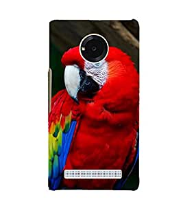 EPICCASE cute parrot Mobile Back Case Cover For YU Yuphoria (Designer Case)