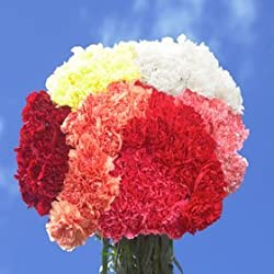 Mothers Day Carnations 200 from Global Rose