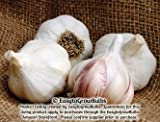 Garlic Silver Rose - varies, 1/2 lb. weight - 1/2 lb. bag