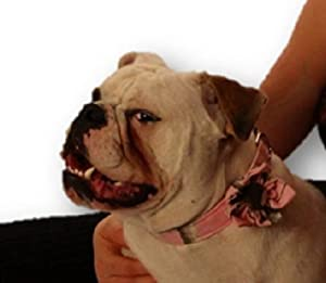 Realtree Pink Camo Dog Collar with Flower Handmade USA by Realtree