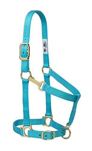 Weaver Leather 35-7435-TU Basic Adjustable Chin and Throat Snap Halter, 1-Inch Average Horse, Turquoise