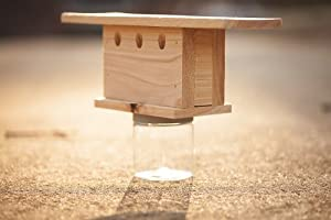 Amazon.com : Bees N Things Top Mount Carpenter Bee Trap : Outdoor And