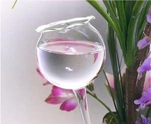 Pflanzensitter Durstkugel Gießblume klein Ø ca. 6,5 cm - klar