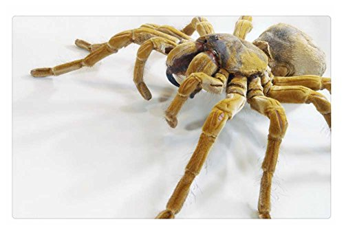 IRocket Indoor Tappeto/Pavimento - La Goliath Bird Eating Spider (59,9 x 39,9 cm 60 cm x 40 cm)
