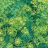 Bouquet Dill Herb 500 Seeds - GARDEN FRESH PACK!