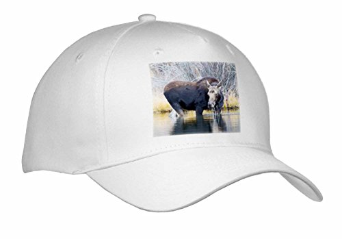 [Danita Delimont - Animals - Wyoming, Cow moose lifting head from pond after feeding. - Caps - Adult Baseball Cap] (Cow Head Hat Adult)
