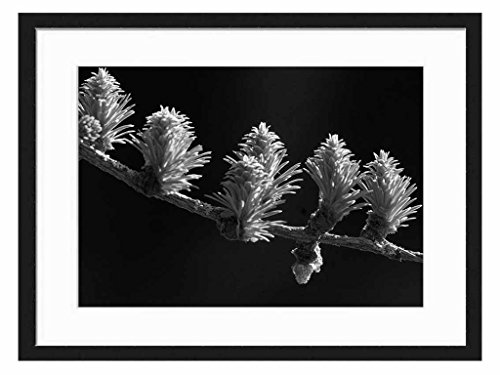 Spring Colors - Art Print Wall Solid Wood Framed Picture (Black & White 20x14 inches)