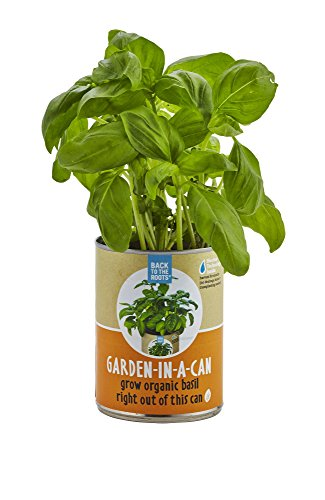 back-to-the-roots-garden-in-a-can-organic-basil