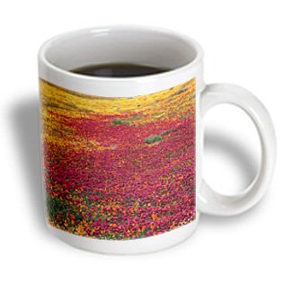 Danita Delimont - Flowers - California Poppy Flowers, California, Usa - Us05 Swe0025 - Stuart Westmorland - 15Oz Mug (Mug_142827_2)