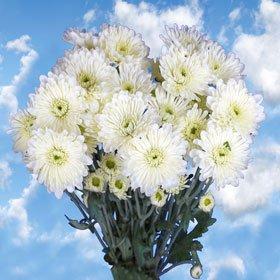 Pom Poms White Cushion 36 Flowers