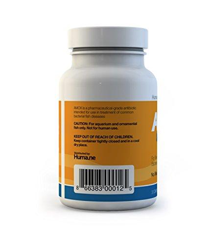 Amoxicillin Shipped From Usa
