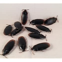 [Best price] Novelty & Gag Toys - 12- Fake Roaches Prank Novelty Cockroach Bugs Look Real - toys-games