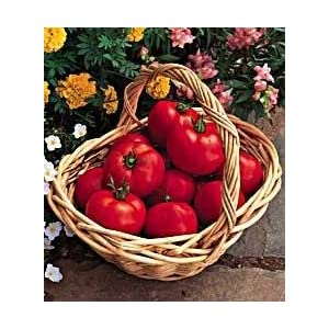 Early Girl Hybrid Tomato 45 Seeds- Blemish Free Skin!