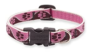 Lupine 1/2-Inch Tickled Pink 8-12-Inch Adjustable Dog Collar for Small Dogs