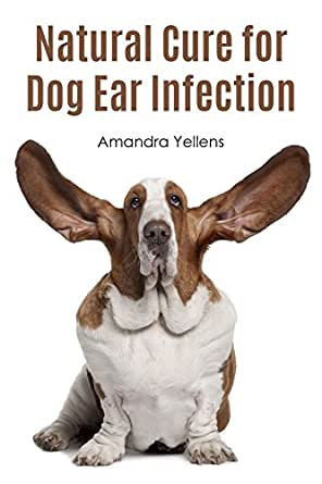Any natural remedies for ear infection? Dogs ear feels hot. Can fish oil be applied to ear? Unfortunately, there are no natural remedies for an ear infection. If your dog's ear feels hot, you are probably right that your dog does have an ear infection. Fish oil will not cure the infection. My dog has all of the symptoms for ear mites.