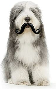 Moody Pet Humunga Stache Ball Dog Toy