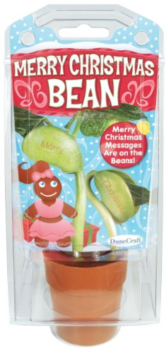 Dunecraft Merry Christmas Bean Science Kit