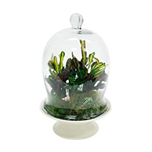 Large Terrarium Bell Jar with Pedestal