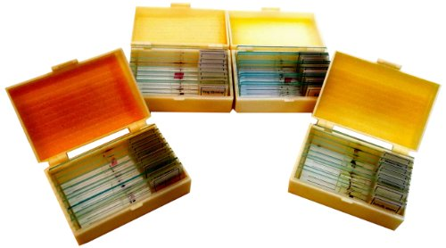 Eta Hand2Mind Prepared Glass Microscope Slides (10 Each Of Plants, Animals, Insects, And Amphibians)