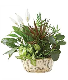 Florence - Eshopclub Same Day Flower Delivery - Fresh Flowers Plants - Wedding Flowers Bouquets - Birthday Flowers - Floral Arrangements
