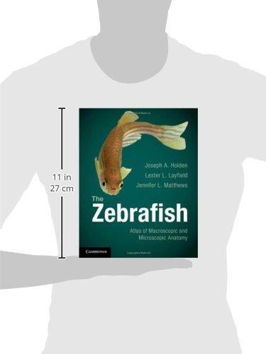 The Zebrafish Paperback