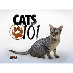 Cats 101 Season 4