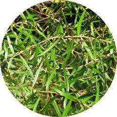 Tea Tree Harmonia Essential Oil