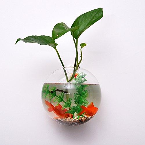 vase en verre transparent mural boule pour plante fleur. Black Bedroom Furniture Sets. Home Design Ideas