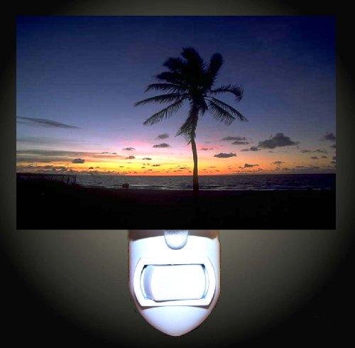 Evening Palm Tree Silhouette Decorative Night Light front-1058853