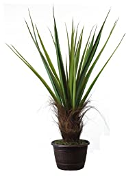 Laura Ashley 50 Inch Tall High End Realistic Silk Giant Agave Plant with Contemporary Planter