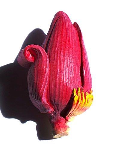 Banana Flower,souvenir, High Quality Resin 3d Fridge Magnet (Banana Resin compare prices)