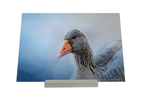 Aufstellbild Vogel Gans Tafel Deko Foto Plakat