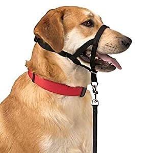 Duck Collar Dog Amazon