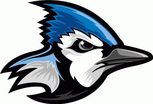 Blue Jay Bird Car Bumper Sticker Decal 5
