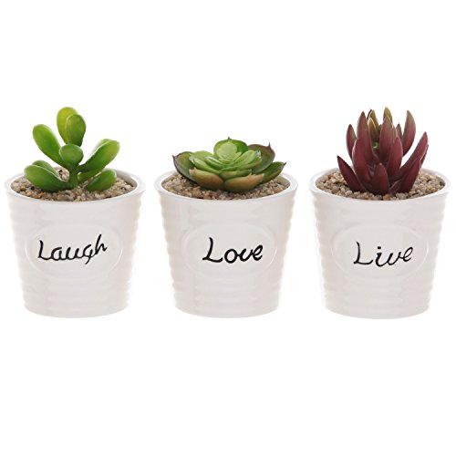 Set of 3 White Ceramic Ribbed Design LIVE LAUGH LOVE Expression Succulent Plant Pot Containers - MyGift® (Succulent Plants In Pots compare prices)