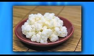 Com kefir grains living probiotic enriched by lifetime kefir