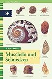 Muscheln und Schnecken. (3332009923) by Dance, S. Peter