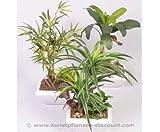 Bambus Mini-Garten, 3er Set im Keramik-Topf, Höhe 34cm - Kunsblumen künstliche Blumen Kunstpflanzen künstliche Pflanzen Blumen
