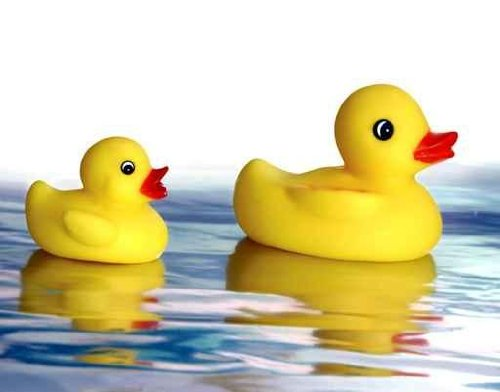 Animal Wall Decals Rubber Ducky - 24 Inches X 19 Inches - Peel And Stick Removable Graphic front-663222