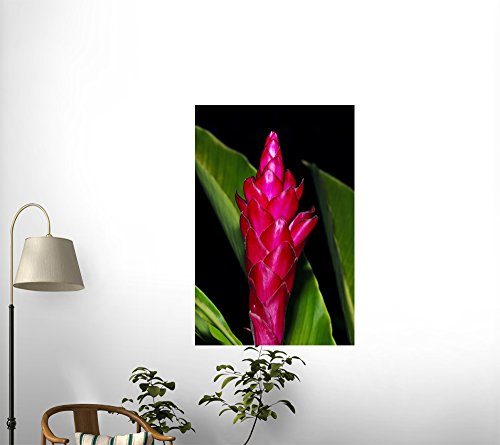 National Geographic - Lavish Pink Petals Unfolding on a Pink Cone Ginger Flower Peel and Stick Wall Decal by Wallmonkeys deal 2016
